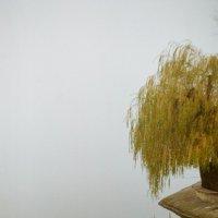 туман :: Dm. S.