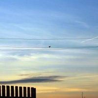 Птичка на проволоке :: Андрей Мирошников
