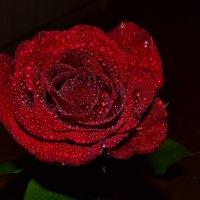 Роза :: Александра Мокроусова