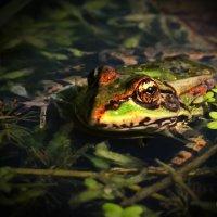 Любопытная лягуха. :: Raisa Rare