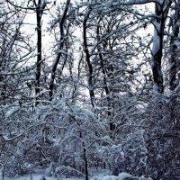 Зимняя чаща :: Роман Божков