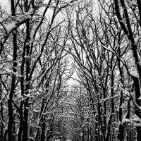 Спящий лес :: Роман Божков