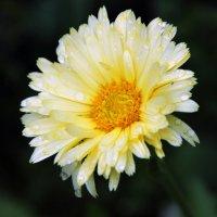 цветок :: Ксения Павлова