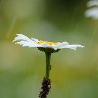 Под зонтом :: BoriSav Sav