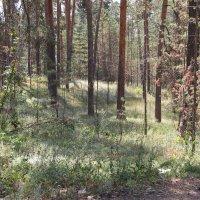 Волшебный лес :: Наталья Лазуткина