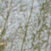 Кустик сон-травы на пляне :: Наталья Золотых-Сибирская