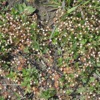 полянка полевых цветов :: Наталья Золотых-Сибирская