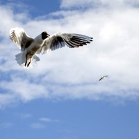 Чайка :: Александр Киприянов