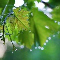 после дождя :: valeriy g_g