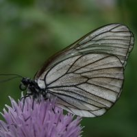 Бабочка на цветке :: Соня Анисимова
