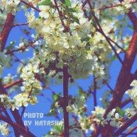 Весна :: Наталия Пацюк