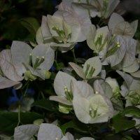 Цветы :: Ирина Палий