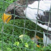 птица ест рыбу :: elena nebo
