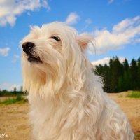 Собака :: Надежда Колупаева