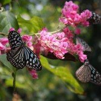 бабочки :: Надежда Шемякина