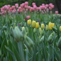 Цветы. :: Анастасия Прибыткова