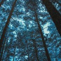 снежный лес :: Ирина