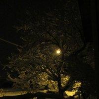 Ночь... фонарь... снег... :: Вячеслав Медведев