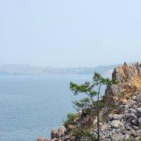 Берег Байкала :: Светлана Стрижова