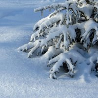 Искрится снег под солнцем :: Татьяна Смоляниченко