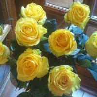 Желтые розы :: марина ковшова