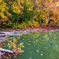 Озеро в лесу. :: Антон