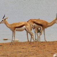 Намибия Этоша :: Михаил Рогожин