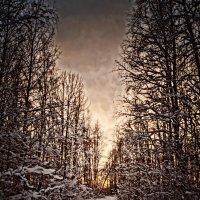 туман идет домой))) :: Валерия Воронова