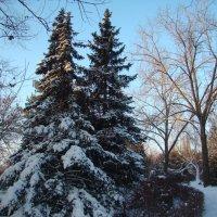 Прогулка в ботаническом саду :: марина ковшова