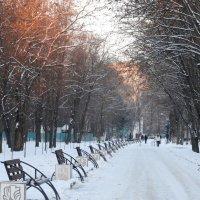 Зима,вечер в парке... :: Тамара (st.tamara)