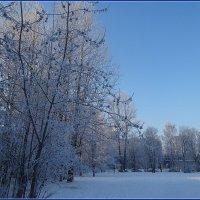 Вот такая у нас зима! :: Вера