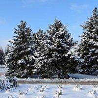 Мороз и солнце, день чудесный! :: Татьяна Смоляниченко