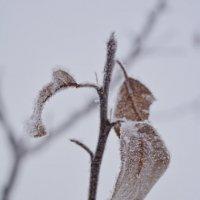 в снегу :: Евгения Ряпасова