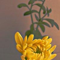 цветок :: Надежда