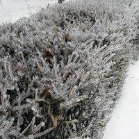 Зима :: Роман Кривеженко