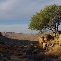 Закат в пустыне. :: Михаил Рогожин