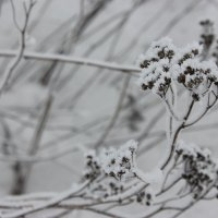 зима :: Наташа Пасакас