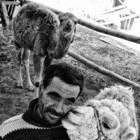 Camel Photo By: Bekhzod Boltaev :: Bekhzod Boltaev