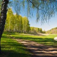 Весна на опушке :: Александр Березуцкий (nevant60)