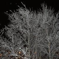 Мороз. Вечер. Северодвинск. :: Михаил Поскотинов