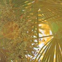Солнечная пальма :: Светлана Стрижова