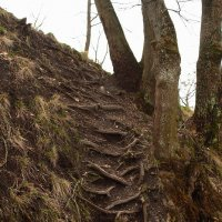 Путь наверх :: Ольга Разенкова