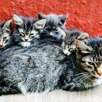 Кошачье семейство :: Sergey Sergaj