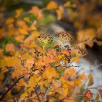 осень беспощадная :: lev