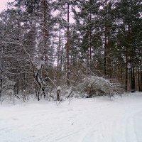 Пришла зима , рассыпалась снегами ! :: Мила Бовкун