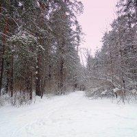 На прогулку в лес ! :: Мила Бовкун