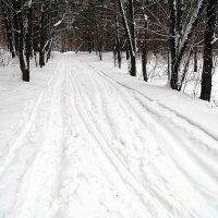 Лыжная и пешая тропа. :: Мила Бовкун
