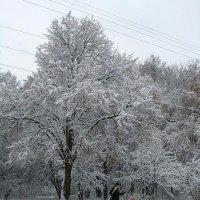 Пора вставать на лыжи :: Сергей Тарабара