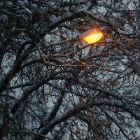 когда зажигают фонари или пора и домой :: Олег Лукьянов