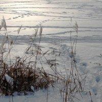 морозное утро :: elena manas
